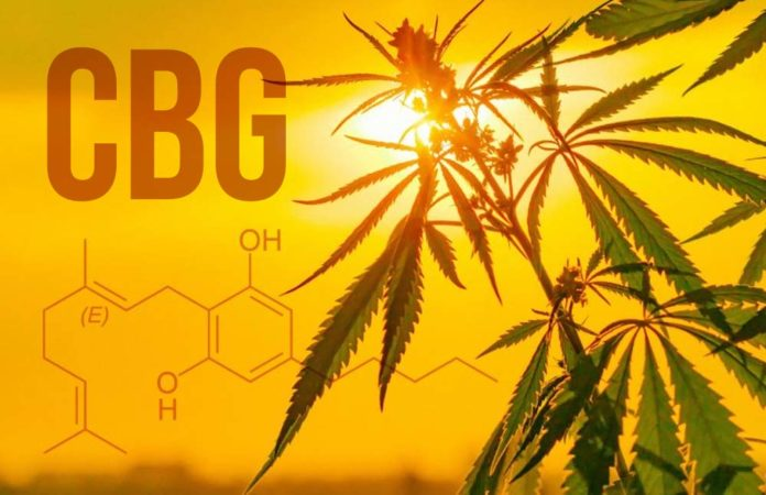 What Is CBG? Exploring The Benefits Of Cannabigerol