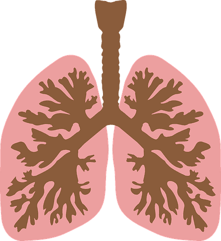 The Ultimate Guide to Protecting Your Lungs from the Joys of Cannabis