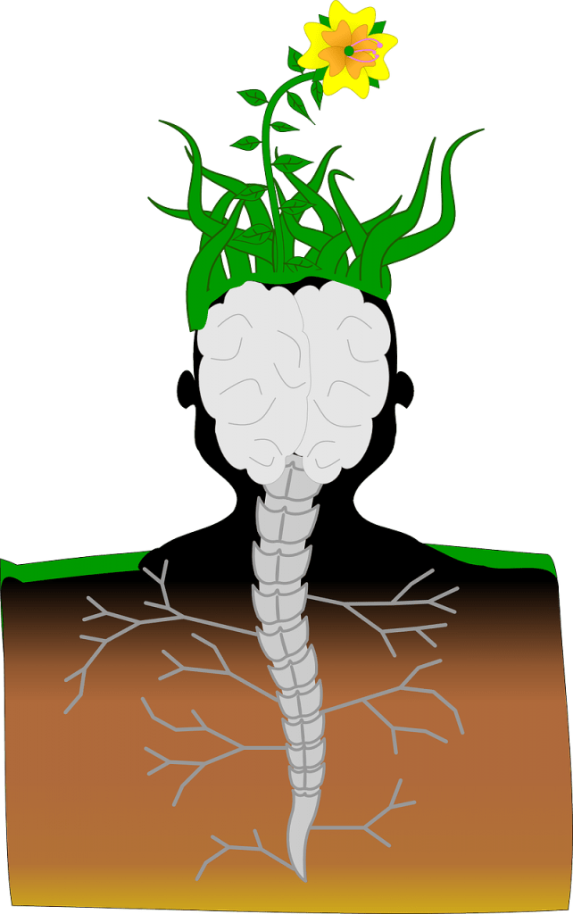 CBD Hemp Oil Health Benefits: 6 Ways Cannabinoids Preserve Your Body and Mind