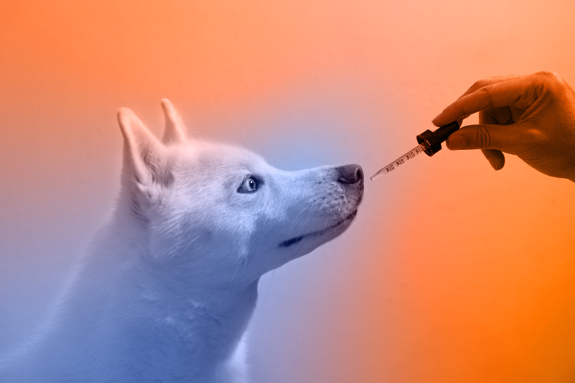 Best Dog Wellness Plans: 9 Things Your Dog Wants You to Know