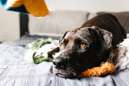 Should You Try CBD Oil for Your Pet?